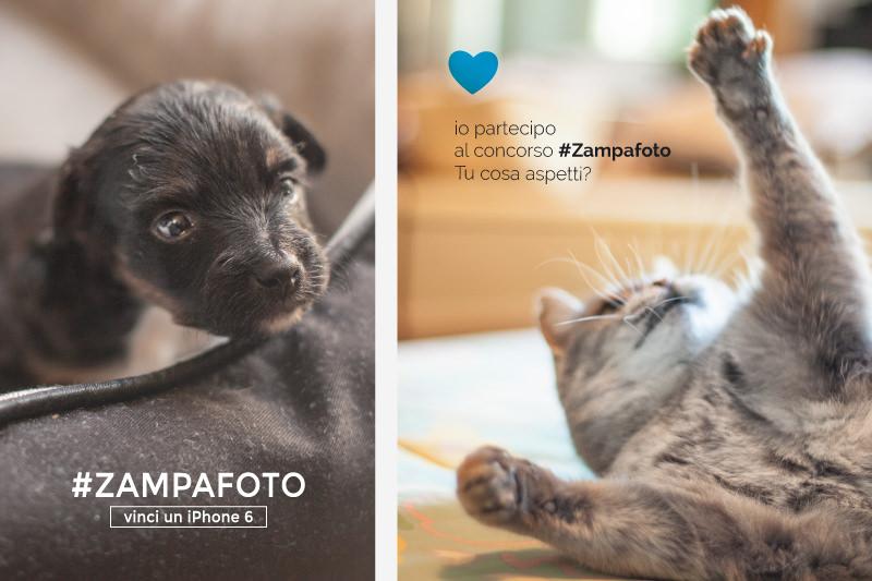 Pagina-Zampa-foto_05.jpg